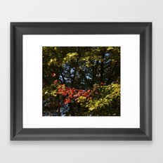 The Leaves Were Smiling at Me, and I Didn't Even Know Framed Art Print