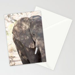 Elephant in the desert of Namibia | Travel photography Africa Stationery Cards