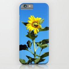 Sun Flower Slim Case iPhone 6s