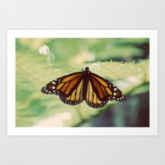 Monarch Art Print