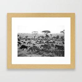 Zebra Stripes Framed Art Print
