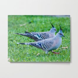 Pair of Crested Turtle Doves Metal Print