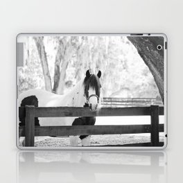 Gypsy Vanner Beauty Laptop & iPad Skin