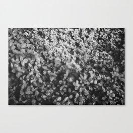Mint Canvas Print