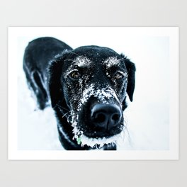 Snow Dog // Cross Country Skiing Black and White Animal Photography Winter Puppy Ice Fur Art Print