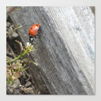 ladybug Canvas Prints featuring Ladybug by Zen and Chic
