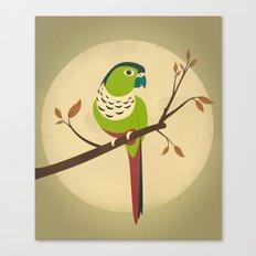 Green Cheek Conure Canvas Print