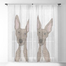 Cute Fawn Greyhound with white belly Sheer Curtain