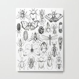 Insect Study Metal Print