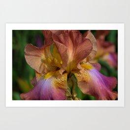 Iris Dreams Art Print