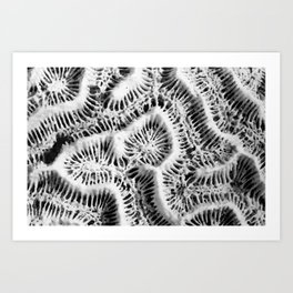 Brain Coral Art Print