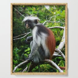 Red Colobus Monkey Serving Tray
