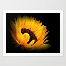 A Sunflower With Waterdrops Art Print