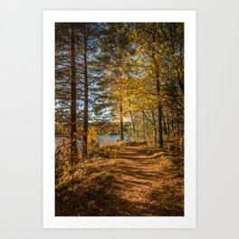 Path in the autumn forest Art Print