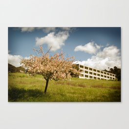 oak knoll, some life Canvas Print