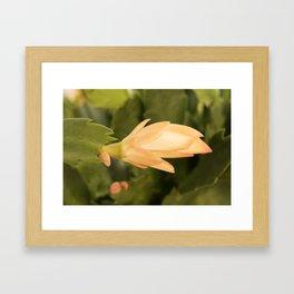 Christmas Cactus In Bloom Framed Art Print