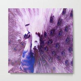 White Purple Peacock Metal Print