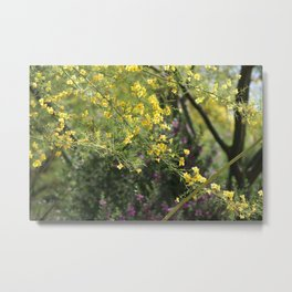 Yellow Palo Verde Blossoms on Purple Texas Ranger Flowers in Background Metal Print