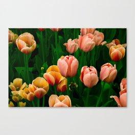 Tulip Festival Ottawa, Canada Canvas Print