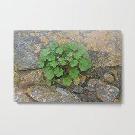Life on a stone wall Metal Print