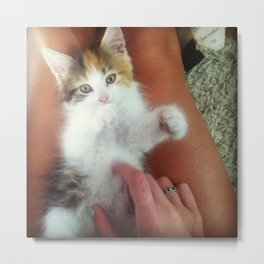 Kitten Chow Metal Print