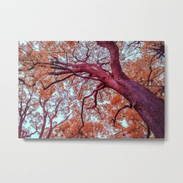 Infrared Oak Tree at Ueno Park, Tokyo, Japan Metal Print