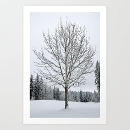 Lone Snow Covered Tree Art Print
