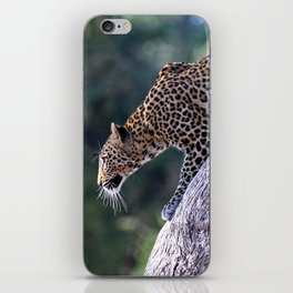 Leopard on the hop - Africa wildlife iPhone Skin