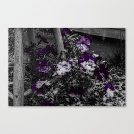 First Snow Of The Season Canvas Print