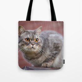 British shorthair cat on the wall Tote Bag