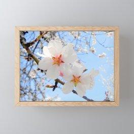 plum tree blossoms closeup Framed Mini Art Print