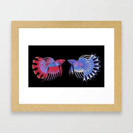 Two crowntail bettas Framed Art Print