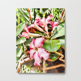 An Adenium Flower Metal Print