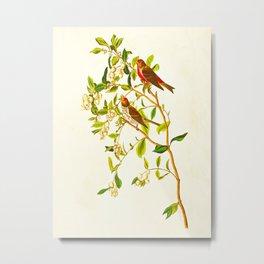 Lesser Red-Poll Bird Metal Print