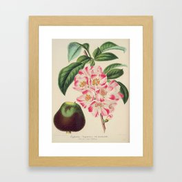 Cydonia Japonica Vintage Botanical Floral Flower Plant Scientific Framed Art Print
