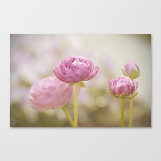 Pink floral Ranunculus flowers in love Canvas Print