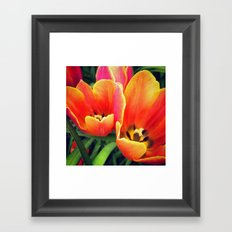 Coral Tulips in Bloom Framed Art Print
