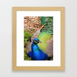 Pretty Bird Framed Art Print