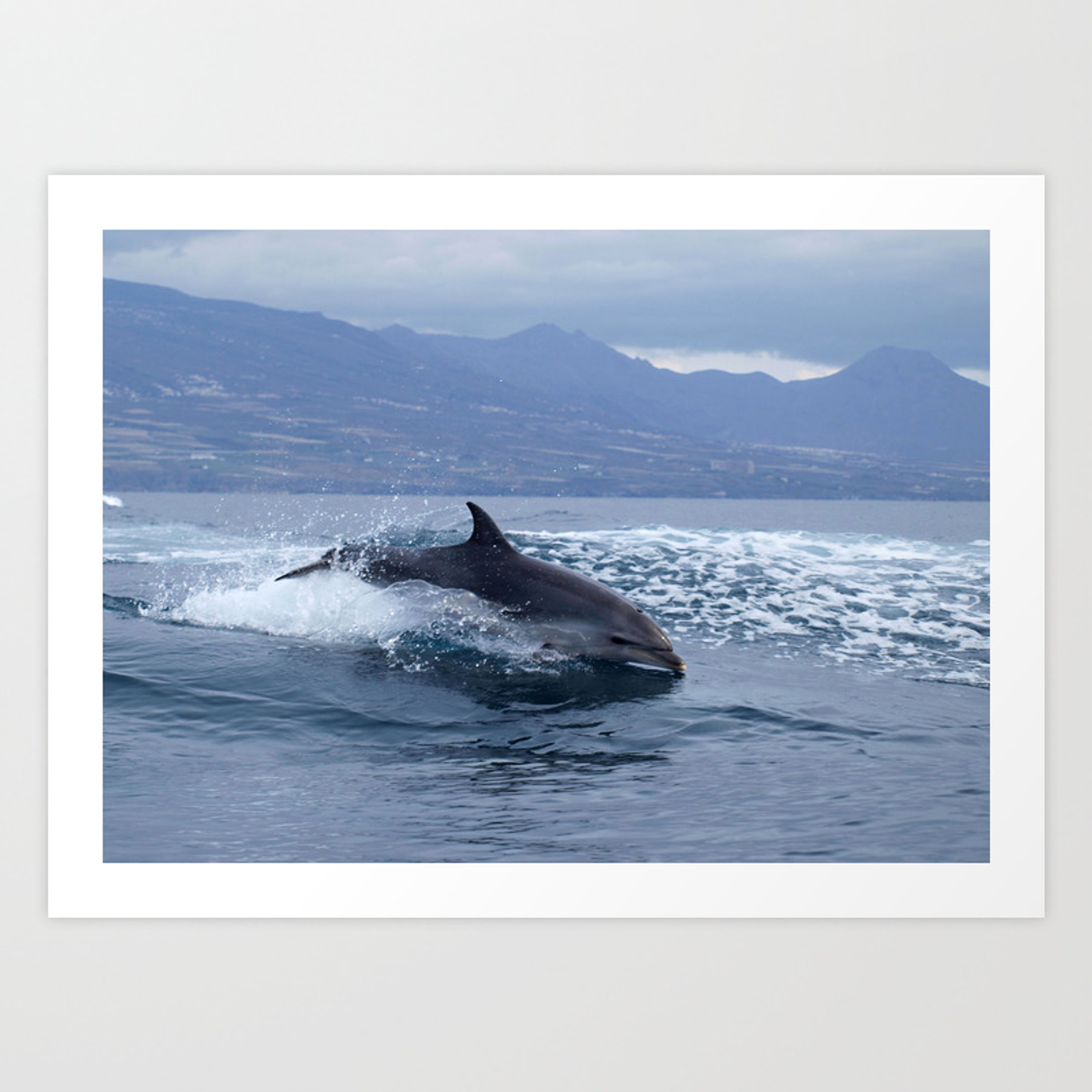 - Wild And Free Bottlenose Dolphin Art Print By