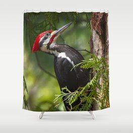 Pileated Woodpecker 6340 Shower Curtain