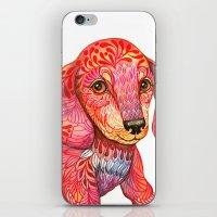 mini iPhone & iPod Skins featuring Mini Dachshund  by Ola Liola