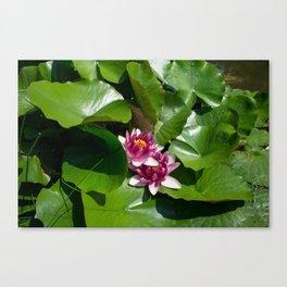Lotus garden nature photo Canvas Print