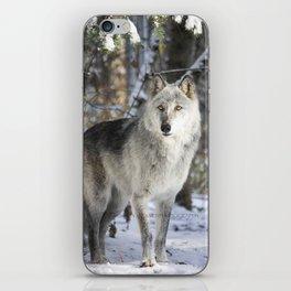 Winter wolfdog iPhone Skin
