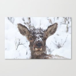 Watercolor Elk Calf 04, Stuffy-nose Canvas Print