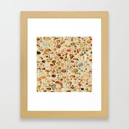 Vintage Mushroom Designs Collection Framed Art Print