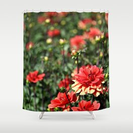 VIBRANT RED DAHLIAS - IN THE LATE AFTERNOON SUNSHINE Shower Curtain