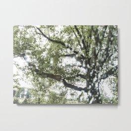 National Arboretum Metal Print