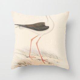 Black winged Stilt himantopus melanopterus5 Throw Pillow