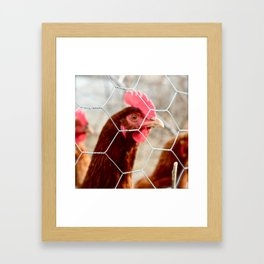 Chicky Chicky  Framed Art Print