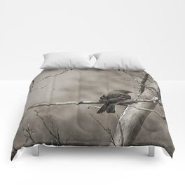 The Quest:  Black and White Bird Antiqued Comforters